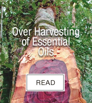 Over Harvesting of Essential Oils